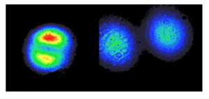 Figure 3.  The left image is at a distance of 21 cm from the edge of the laser and the image to the right is at a distance of 127 cm from the laser.  It is clear that the separation between the two spots increases with distance.